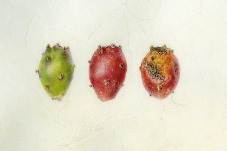 <i>Opuntia</i> spp., fruit